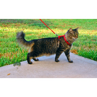 Cat Harness & Leash