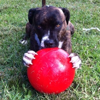 Aussie Dog Enduro and Staffy Ball