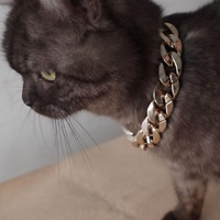 Gold Cuban Chain Cat Collars