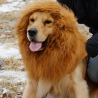 Lion WIg For Dogs