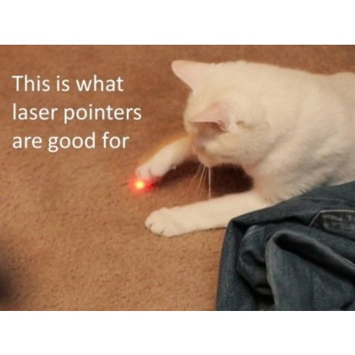 2in1 Laser Pointer and Torch - Great Cat Toy
